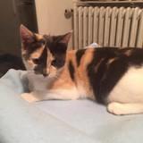 Mimie, Chaton européen à adopter