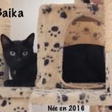 Baika, Chat  à adopter