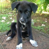 Nanoula, Chiot  à adopter
