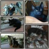 Mora, Chaton  à adopter