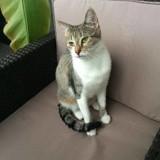 Didi, Chat  à adopter