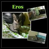 Eros, Chiot  à adopter