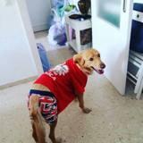 Buddy, Chien  à adopter