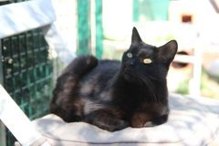 Naya, Chat à adopter