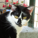 Sos astra, Chat à adopter