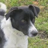 Nouchka, Chiot  à adopter