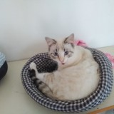 Fiona, Chat  à adopter