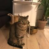 Mistinguette, Chat gouttière à adopter