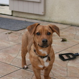 Pims, Chiot  à adopter