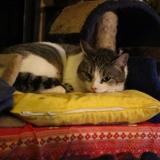 Sam, Chat européen à adopter