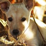 Lizzy, Chiot  à adopter