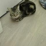 Tornade, Chat gouttière à adopter