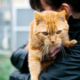 Sos garfield, Chat  à adopter