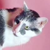 Theo, Chat européen à adopter