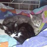 Irina, Chaton à adopter