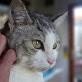 Paloma chat à bras, Chat  à adopter