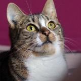 Damoiselle la meilleure copine, Chat  à adopter