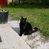 Urgent - cassy, belle minette à la rue, cherche sa famille pour la vie, merci de l'aider, Chat européen à adopter