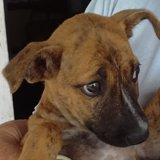Kaly, Chiot  à adopter