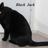 Blackjack, Chat  à adopter
