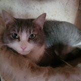 Grizou, Chat  à adopter