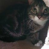 Tom, Chat  à adopter