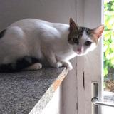Méline, Chat européen à adopter