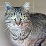 Armande, Chat à adopter