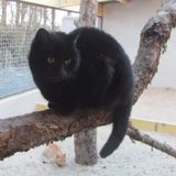 Matheo, Chat  à adopter