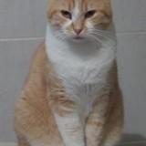 Nokyo, Chat  à adopter