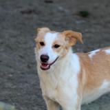 Dina, Chiot  à adopter