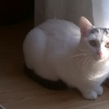 Iéna, Chat  à adopter