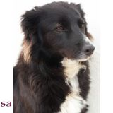 Rosa, Chien  à adopter