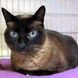 Nody, Chat à adopter