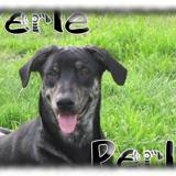 Perle, Chiot  à adopter