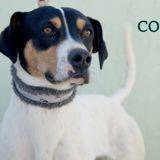 Coco, Chien  à adopter