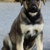 Tilou, Chiot  à adopter