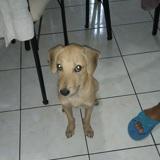 Kalou, Chiot  à adopter