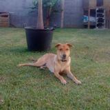 Ruben, Chiot  à adopter