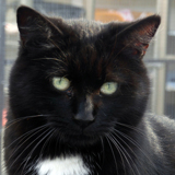 Cordoba belle et joueuse, Chat à adopter