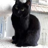 Nelsa, Chat à adopter