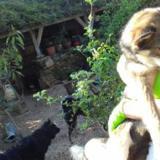 Raphael, Chien  à adopter