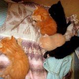 5 chatons sauvés avec leur maman, Chaton  à adopter
