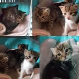 4 chatons sauvés avec leur maman, Chaton  à adopter