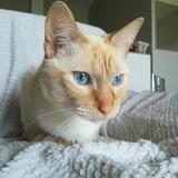 Samy, Chat  à adopter