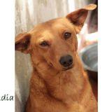 Claudia, Chien  à adopter