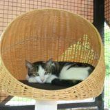 Niko, Chat à adopter