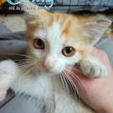 Onny, Chaton à adopter