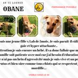 Obane, Chiot  à adopter