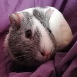 Lili, chonne femelle, Animal  à adopter